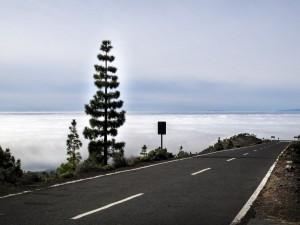 Tenerife bajo el Volcán 6