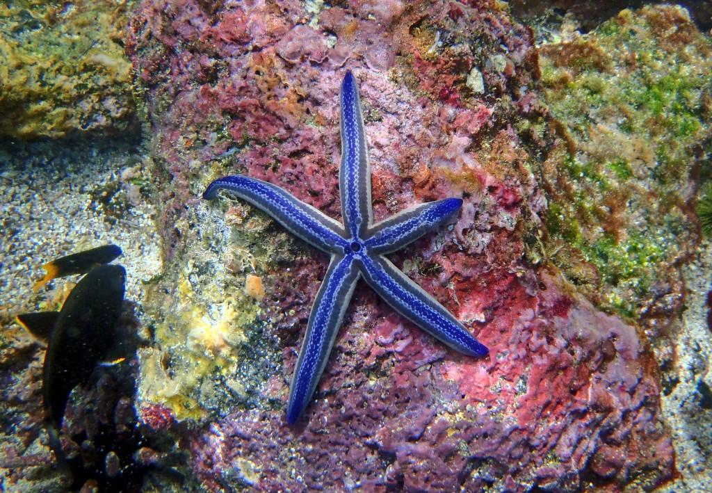 Las Islas Galápagos, un laboratorio natural 6