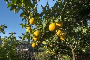 Sorrento y la Costa Amalfitana 1