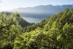 La Palma, La isla del corazón verde