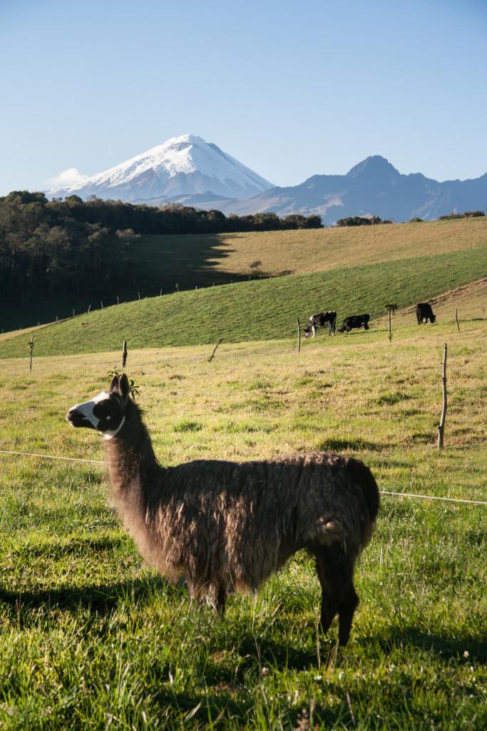 Ecuador, el secreto de los Andes 1