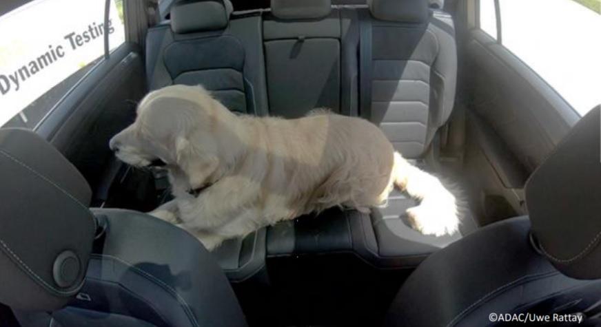 Tu mascota, siempre bien sujeta en el coche 1