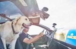 Tu mascota, siempre bien sujeta en el coche