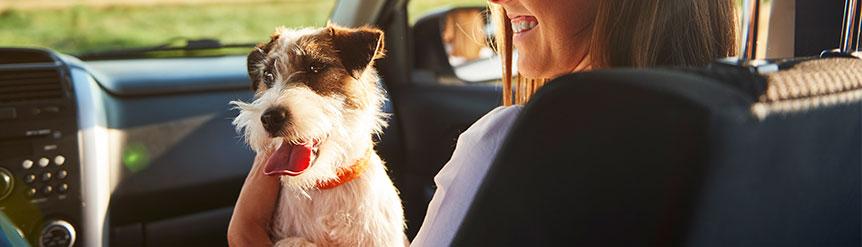 Cómo debes viajar con tu mascota en avión, barco o tren