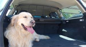 Viajar con mascota en el coche