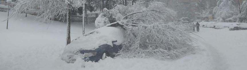 Coche con árbol encima por nevada